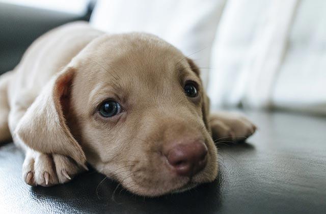 hundveterinär behandling hundar vännäs umeå