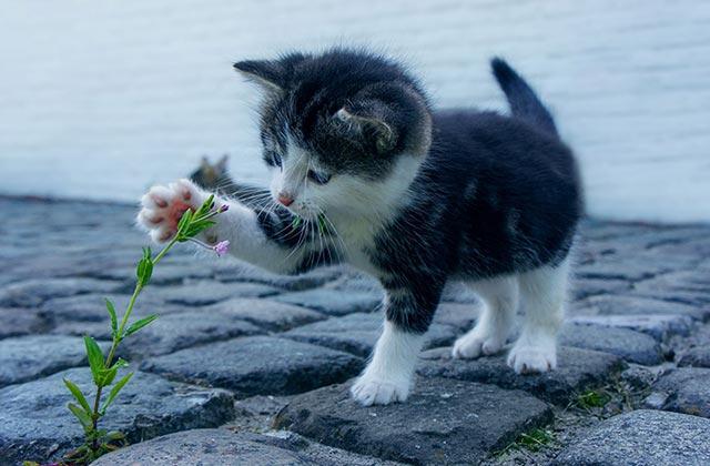 kattveterinär behandling katter vännäs umeå
